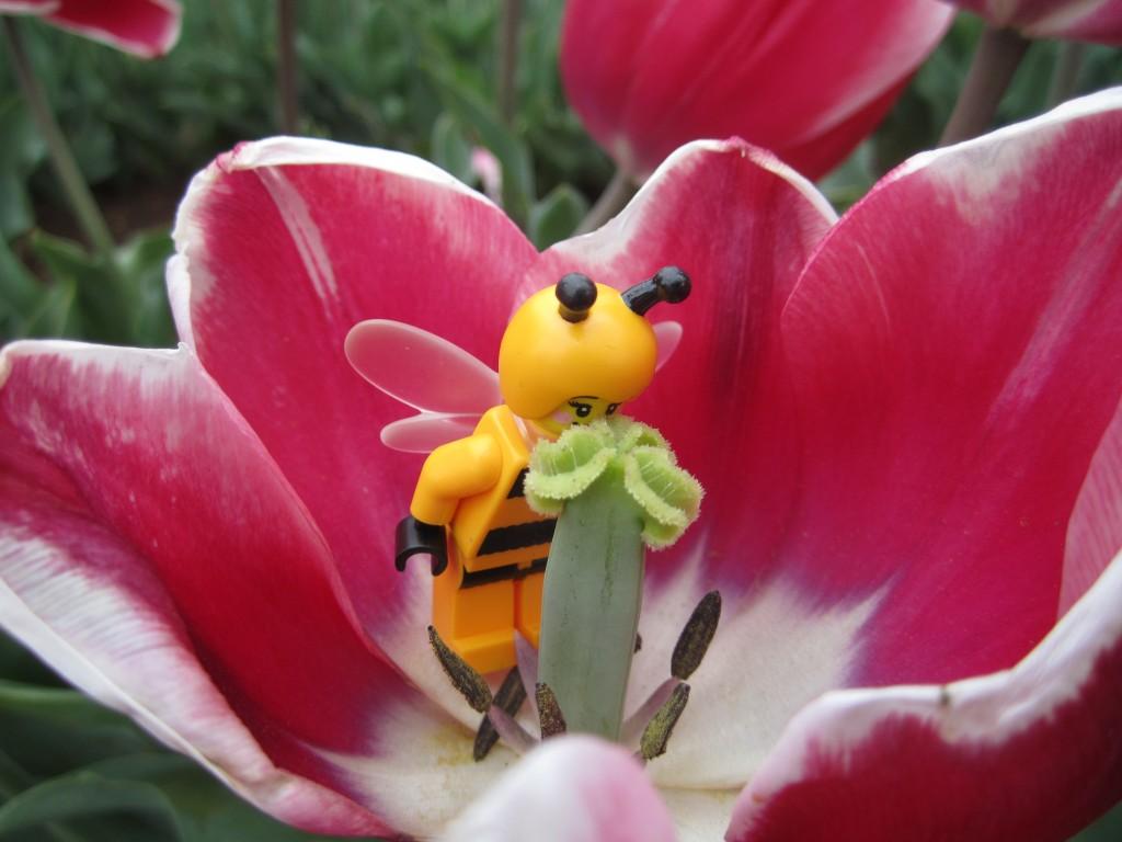 LEGO Bumblebee Girl at Tulip Festival 2014 (15)