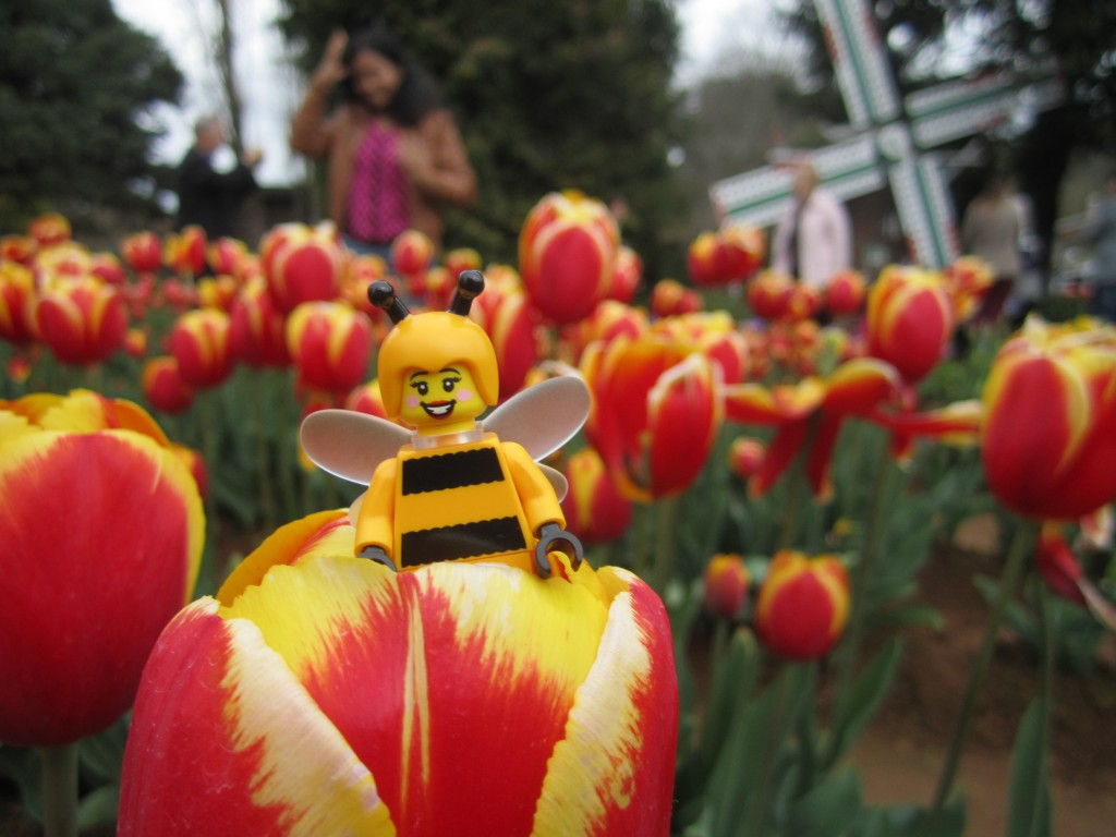 LEGO Bumblebee Girl at Tulip Festival 2014 (3)