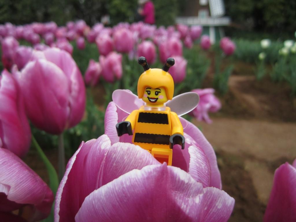 LEGO Bumblebee Girl at Tulip Festival 2014 (4)