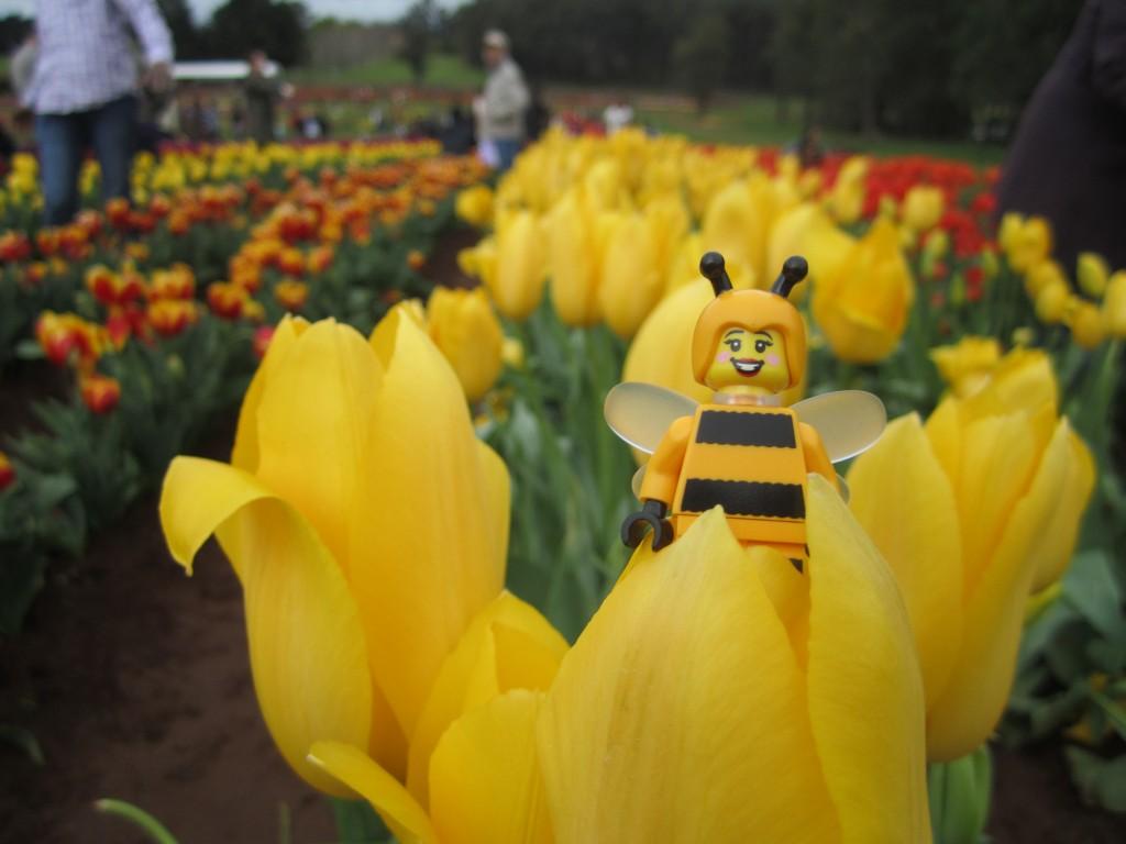 LEGO Bumblebee Girl at Tulip Festival 2014 (6)