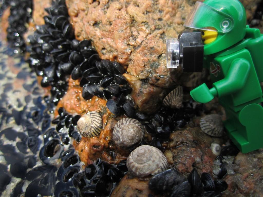 LEGO Adventures in Tasmania 2014 (27)