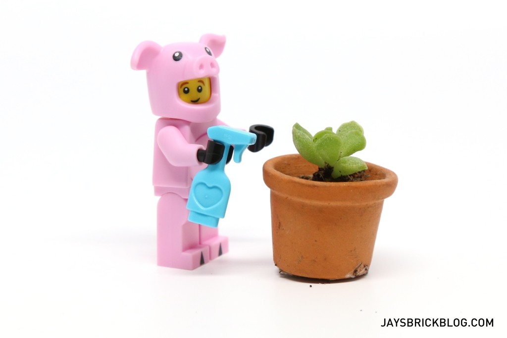 Piggy Guy Watering Succulent