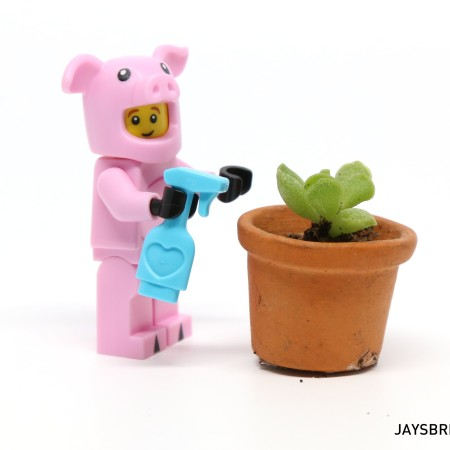 Piggy Guy Watering Succulent